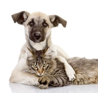 ASPCA Dog And Cat Picture