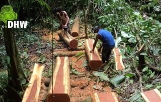 Harvestin hardwood